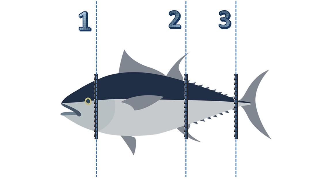 tuna cut